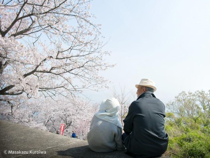 1_桜まつり(不動尊)11